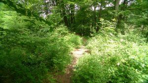 Fußpfad zur Aussicht östlicherÜbergang