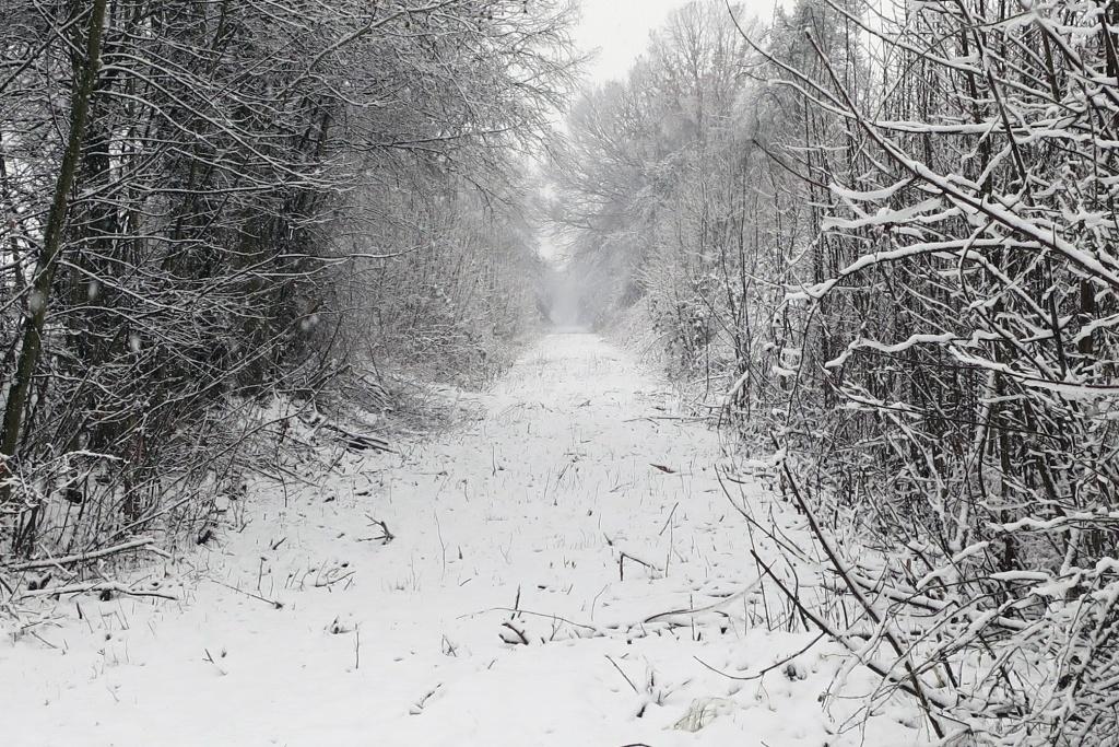 Trasse der Almetalbahn bei Niederntudorf im Schnee